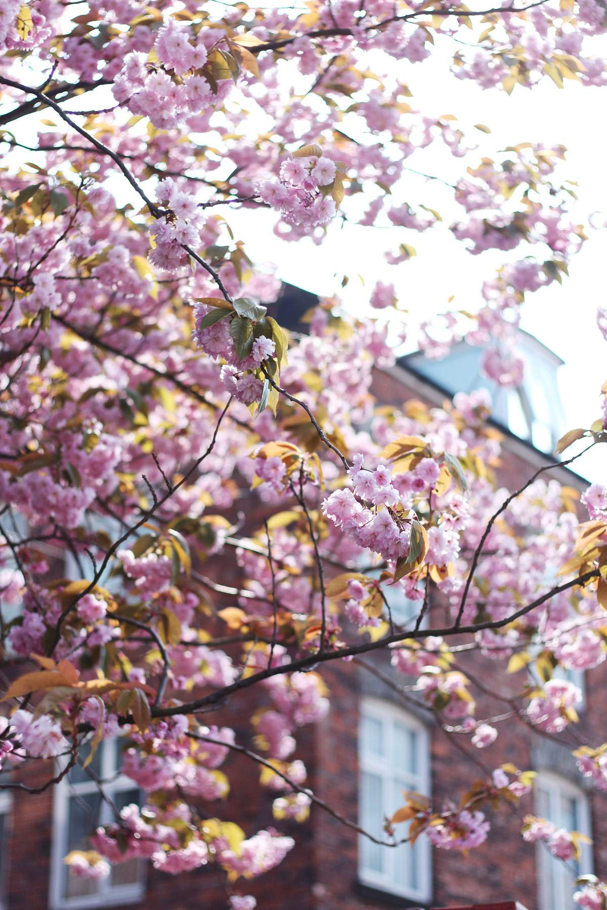 spring-blossoms-newcastle-north-east-blogger-pretty-pink-1
