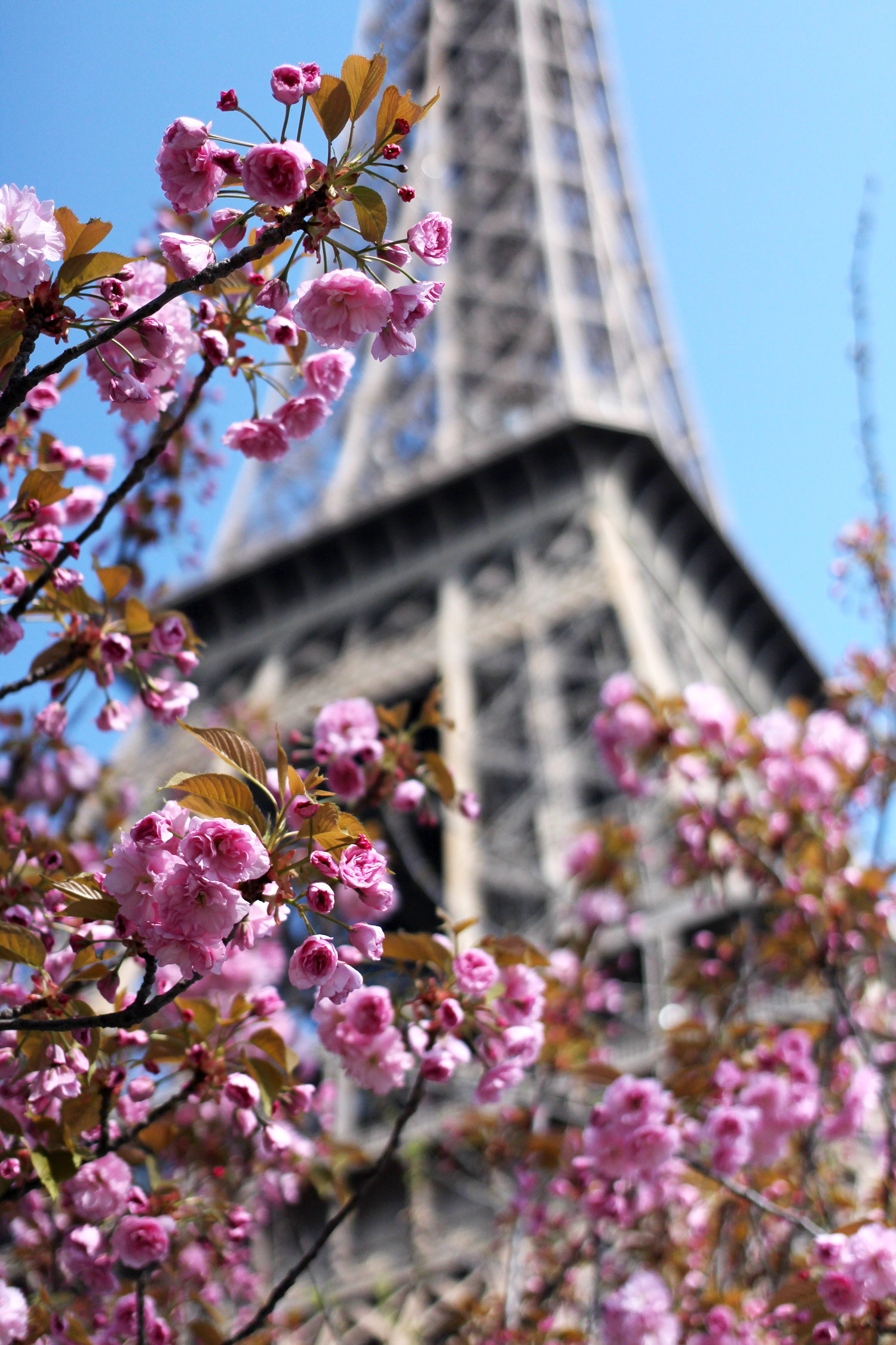 paris-photo-diary-travel-blogger-spring-15