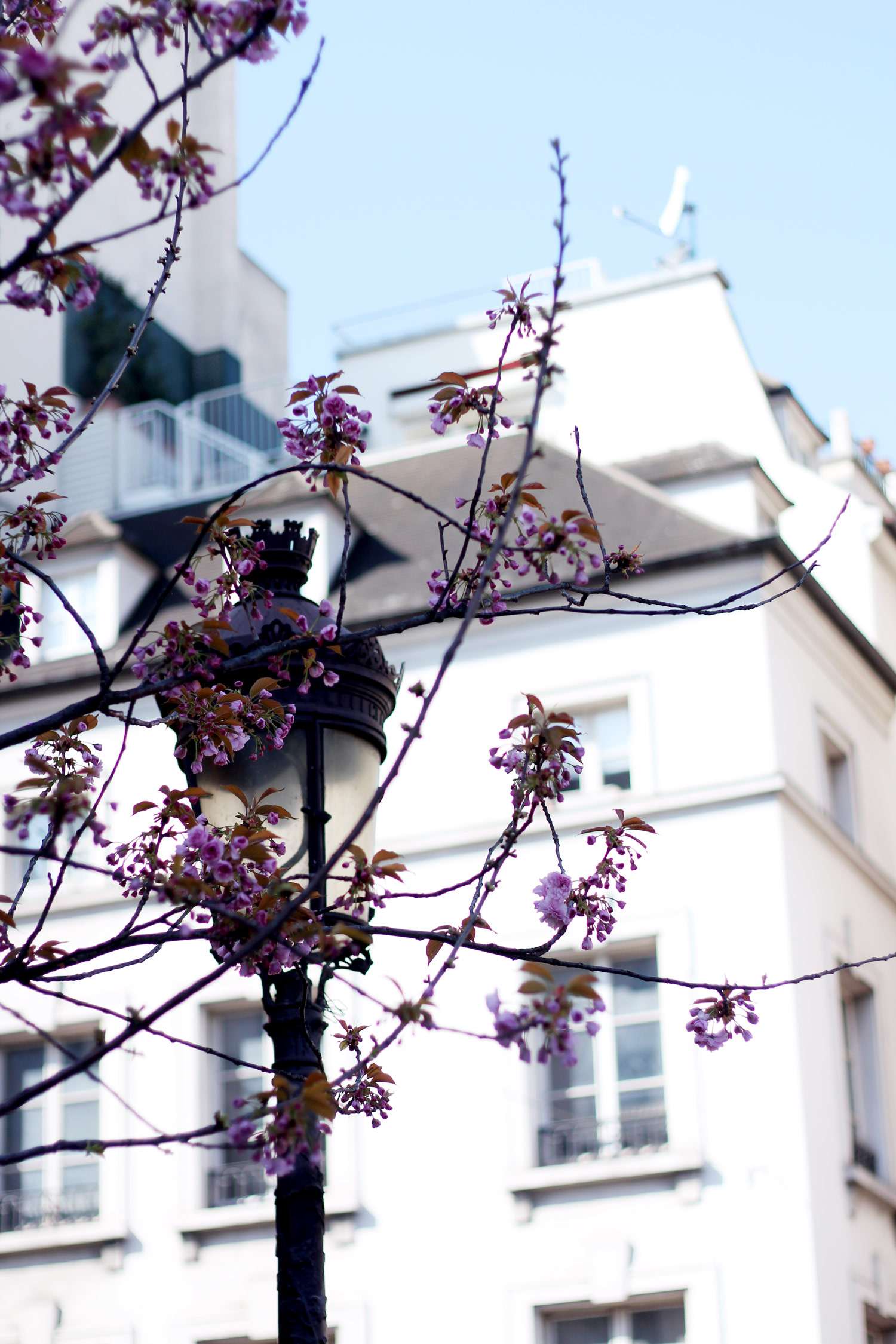 paris-photo-diary-travel-blogger-spring-21