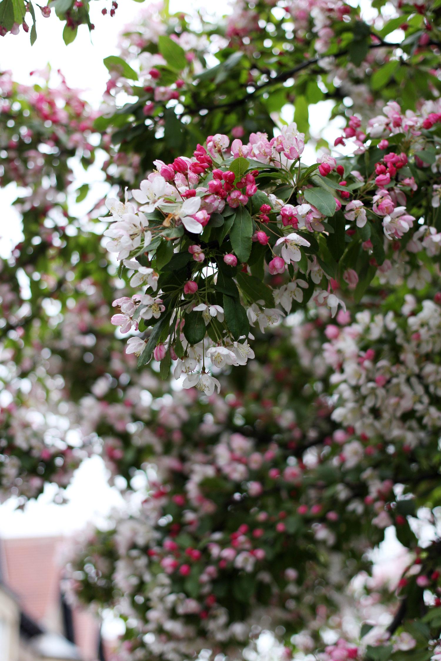 spring-denim-jacket-pink-jumper-leather-skirt