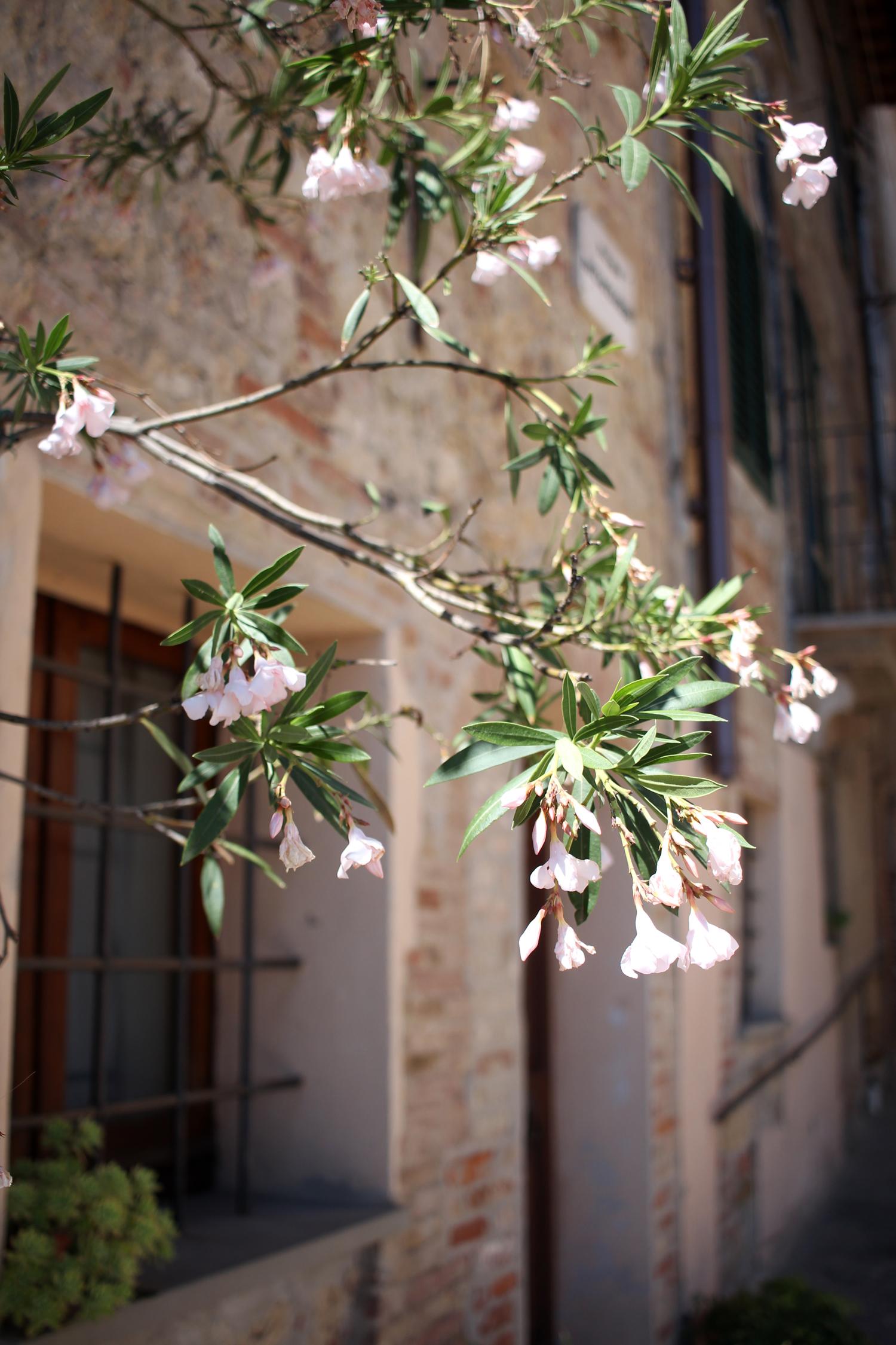 tuscany-italy-montepulciano-travel-blogger-8
