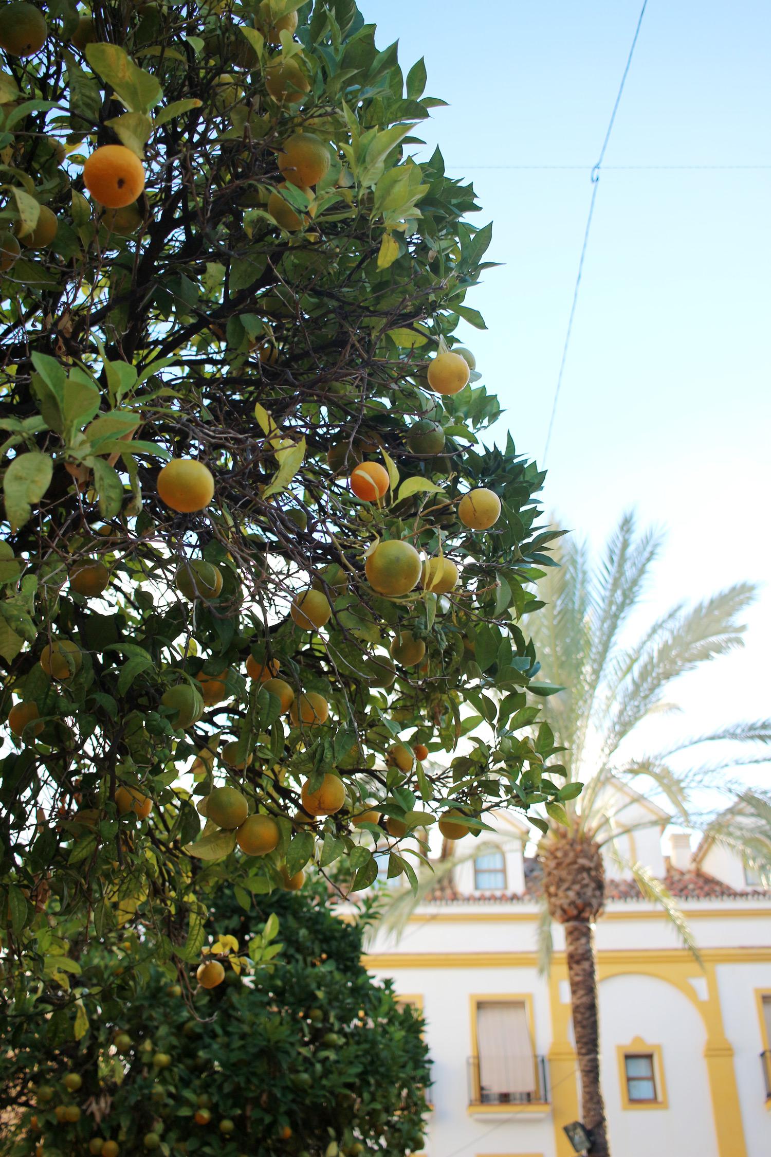 marbella-malaga-spain-travel-blogger-old-town-marbella-12